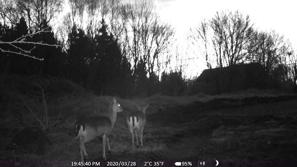 Deer_280320.jpg